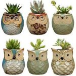 Ceramic Pots For Plants