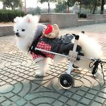 Full Support Dog Wheelchair