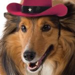 Cowboy Hat For Dogs