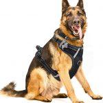 Rabbitgoo Front Range Dog Harness