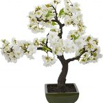 Bonsai Cherry Blossom Tree